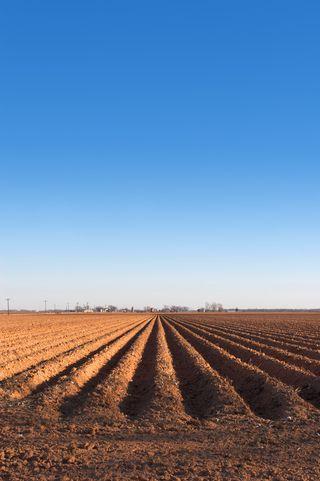 Farm Land MP900448688
