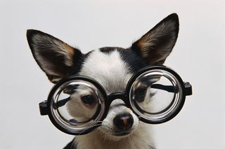 Dog with Glasses MP900407016
